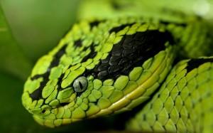shrewd as serpent