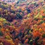 missing-fall colors