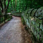 shuddered-path