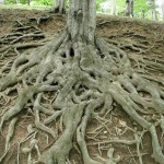 addiction-roots